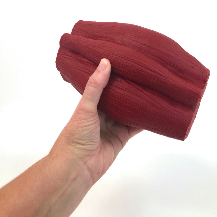 mighty muscle model, 5 pounds of flexed muscle tissue look and feel, held in hand, Health Edco, 26022