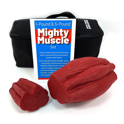 mighty muscle model set, 1 pound and 5 pounds of flexed muscle tissue look and feel, Health Edco, 26023 with case