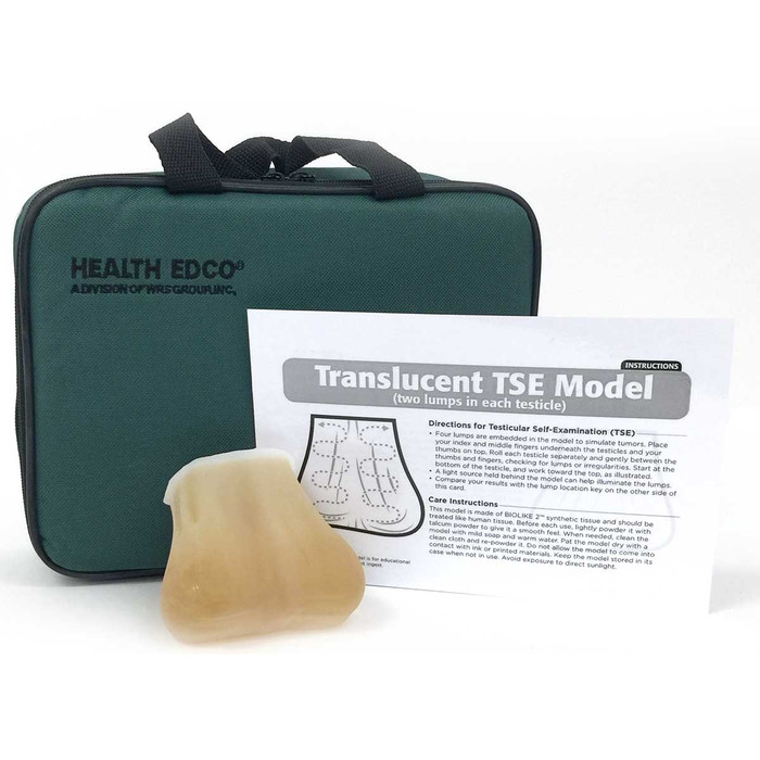 testicular self-exam model, authentic feel of testicles inside scrotum, two palpable lumps in each testicle, Health Edco, 26408