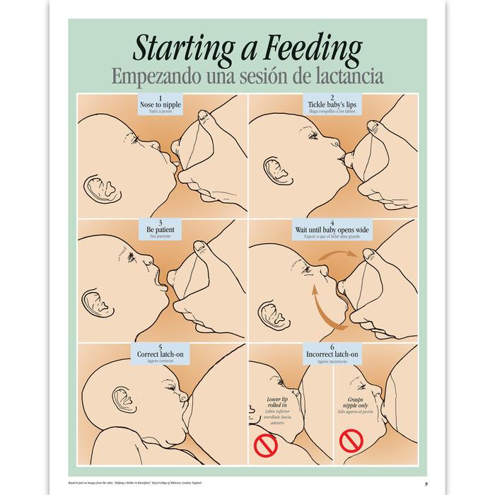 Breastfeeding Basics illustrated English/Spanish spiral-bound chart 6 steps starting a feeding, Childbirth Graphics, 43308