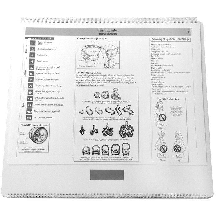 Childbearing illustrated large spiral bound flip chart first trimester day 22 through 12 weeks teaching notes, Childbirth Graphics 50701
