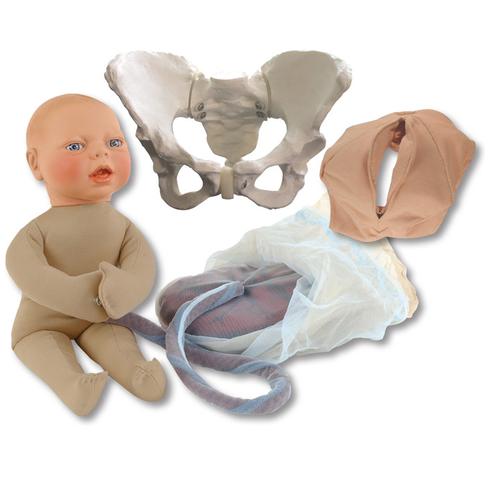 Childbirth Model Set with beige skin tone fetal model, pelvis, perineal cloth and placenta models, Childbirth Graphics, 78968