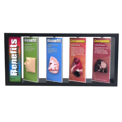 Benefits of Not Smoking 3-D Display for health education with body organ models, tobacco education models, Health Edco, 79032