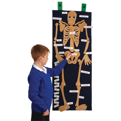 Bag of Bones anatomy and PSHE education resource, pupil adding labels to identify different bones of a human skeleton, 79994